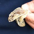 写真: 蛇の脱け殻(3)H30,9,18