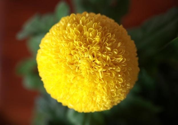 真上からの玉菊