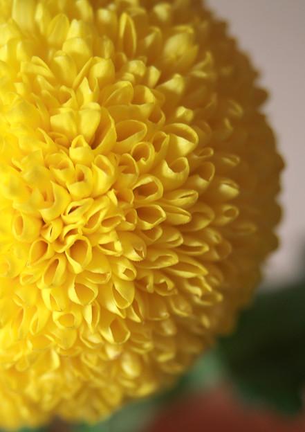 真横からの玉菊