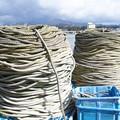 Photos: 哀愁ロープ(2)