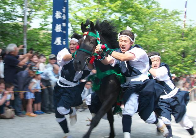 玉若酢命神社風流(12)  馬入れ神事(2)有木馬