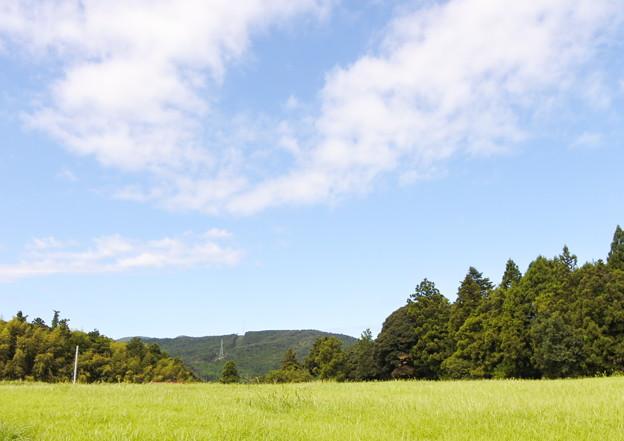 尼寺山風景
