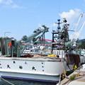 Photos: 港の風景(37) 巾着網本船(1)