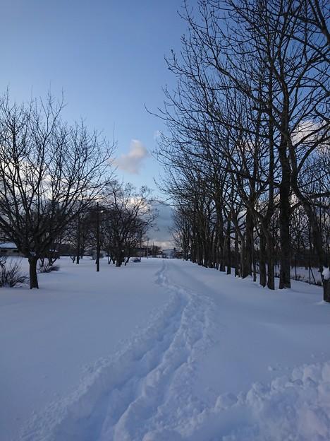 写真: 新雪を歩く