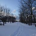 新雪を歩く