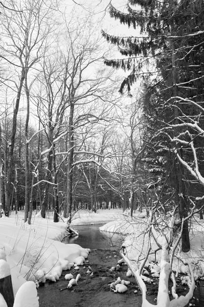写真: 北大苫小牧研究林 6