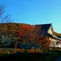 写真: 10月26日(金)の紅葉