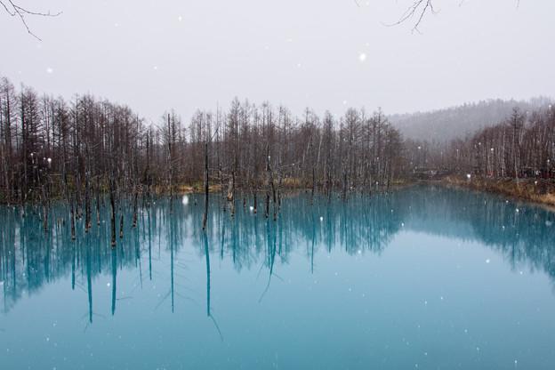 青い池2018