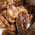 Photos: サロマ産 牡蠣2018