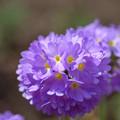 Photos: 庭の春一番