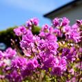 Photos: 庭の花 20190519_1