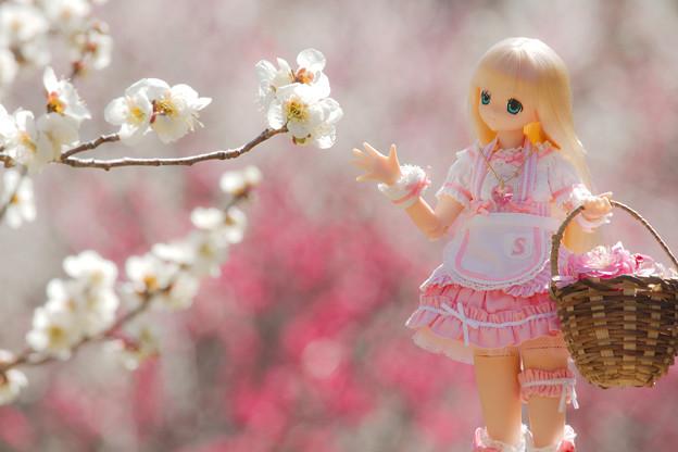 お花摘み-5