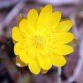写真: ついに春が来た!