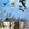 写真: 鳥さん達