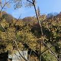 Photos: 1213阿武山21