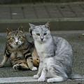 Photos: 仲良し猫のカメラ目線!