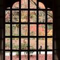 格子窓の紅葉風景2015