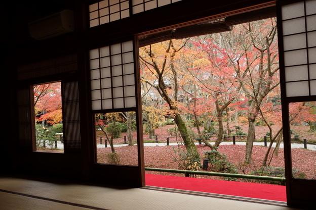 紅葉風景2015