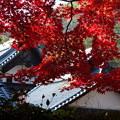 光明寺の紅葉風景2015