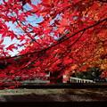 京都の紅葉2015