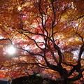 紅葉満開の嵯峨野2015