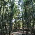 竹林の小道2015