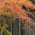紅葉と竹林2015