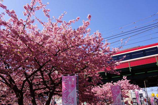 河津桜と赤い電車20160221e