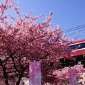 写真: 河津桜と赤い電車20160221e