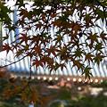 写真: 北鎌倉紅葉1123ta