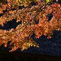 写真: 北鎌倉紅葉1123tb