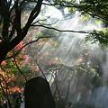 写真: 鎌倉/建長寺の紅葉1201ta