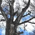 春を待つ、大樹を抱いて