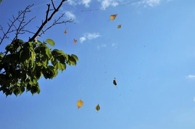 秋のような