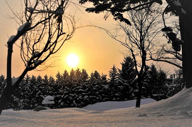 雪に西日を