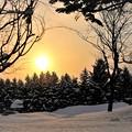 Photos: 雪に西日を