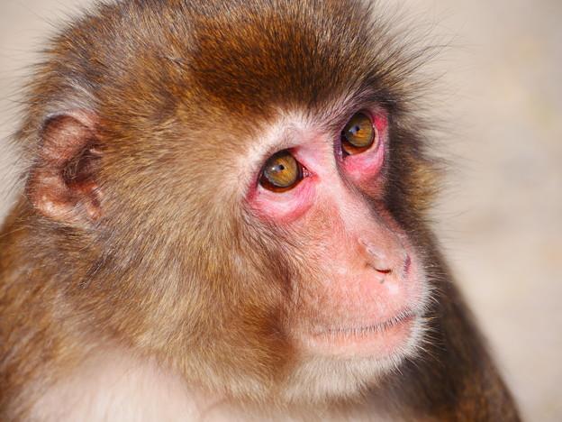 写真: 上目遣い~高崎山自然動物園