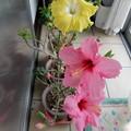 黄色が咲きましたよ~!