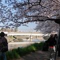Photos: 綾瀬川とサクラ