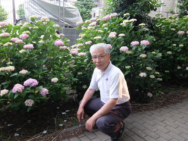 紫陽花 & おじさん