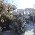 写真: 雪の次の日