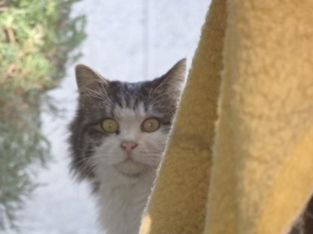 モフ猫さん
