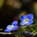 写真: 春光浴びて