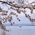 湖西の春(1)
