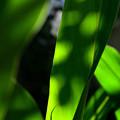 写真: 梅雨晴れに輝く緑