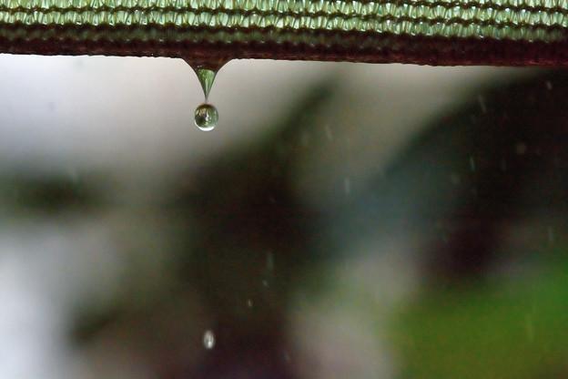 写真: 雨だれひとつ・・・