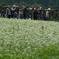 写真: 蕎麦畑とカメラマン