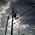 見上げれば・・・白と黒の線が交差