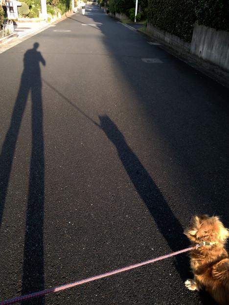 夕方のワン散歩