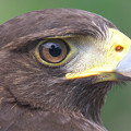 Photos: 鷹の目!